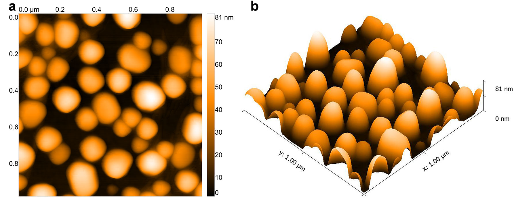 AFM images of LSPR gold nanochips